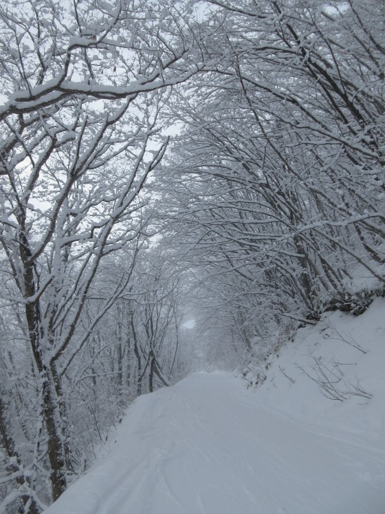 2020-01-31_1412_林道の白くなった木々の屋根_IMG_2169_s.JPG