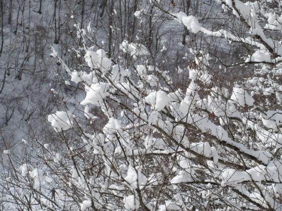 2020-02-01_1034_ハンの木第1クワッドリフト横の白くなった木_IMG_2205_s.JPG
