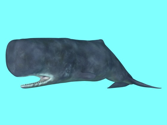 Animated Sperm whale Rig