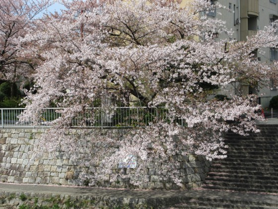 2020-04-11_1008_サクラ・庄下川_IMG_3549_s.JPG