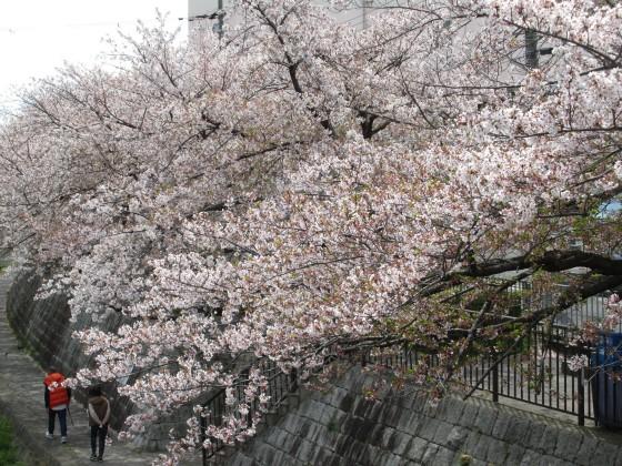 2020-04-11_1014_サクラ・庄下川_IMG_3561_s.JPG