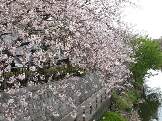 2020-04-11_1021_サクラ・庄下川_IMG_3573_s.JPG