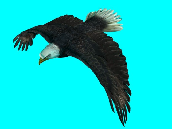 Flying_Eagle_Rig_fbx_obj_e1_Air_Down_w560h420q10.jpg