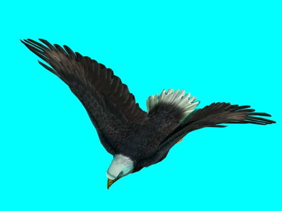 Flying_Eagle_Rig_fbx_obj_e1_Air_Up_w560h420q10.jpg