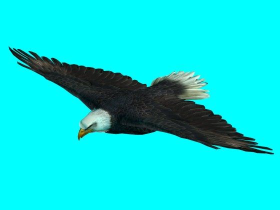 Flying_Eagle_Rig_fbx_obj_e1_Air_w560h420q10.jpg
