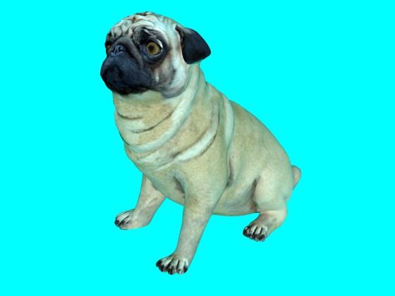 Dog N220420