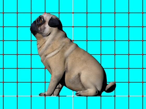 Dog_N220420_e1_POV_scene_Scaled_w560h420q10.jpg