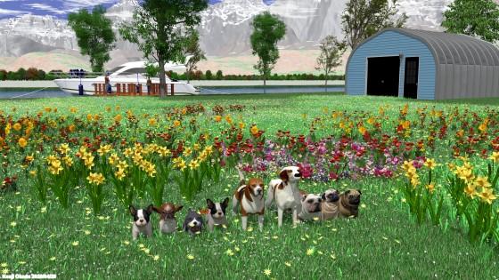 花盛りの野原で遊ぶ小型犬