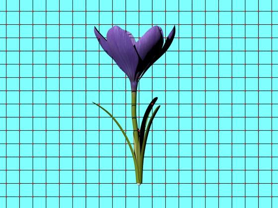 Crocus_Flower_V1_Free3D_e1_POV_scene_Scaled_w560h420q10.jpg