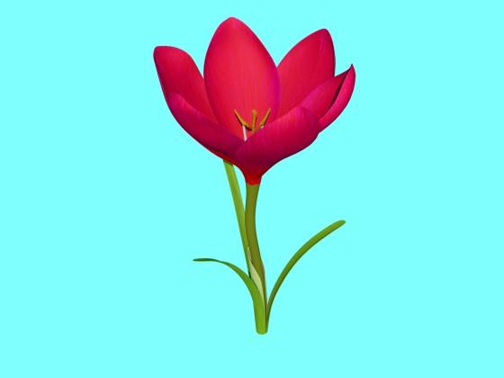 Crocus_Flower_V1_Free3D_e1_Red_w560h420q10.jpg