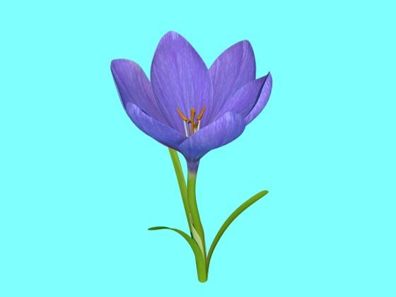 Crocus Flower V1