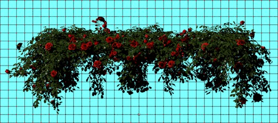 Rose_plant_set_29_fbx_obj_e2_POV_scene_Scaled_w560h248q10.jpg