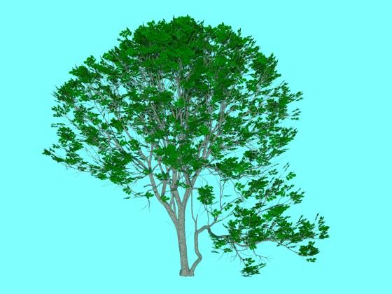 Oak_tree_2_TurboSquid_e1_Green_w560h420q10.jpg