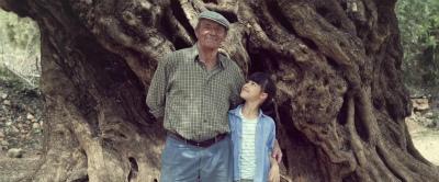 オリーブの樹は呼んでいる