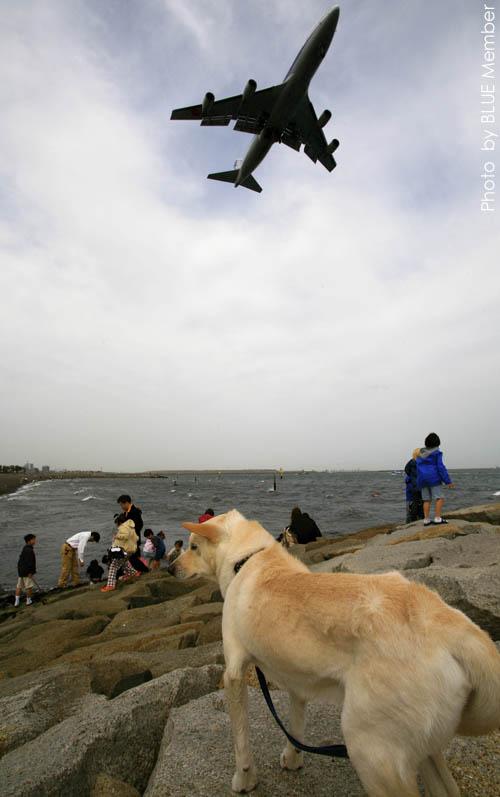 犬とジャンボ