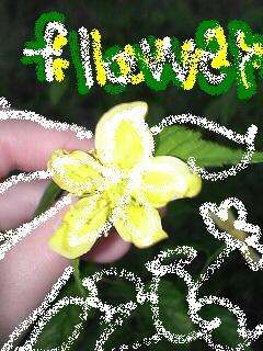 管理人が道端で見つけたお花です