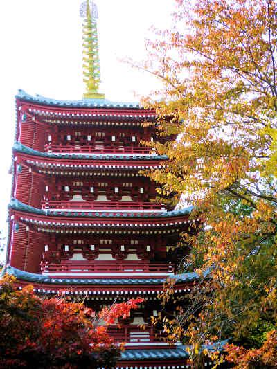 紅葉の本土寺の五重の塔の画像