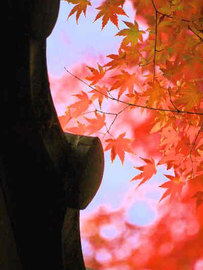 紅葉の本土寺_7の画像