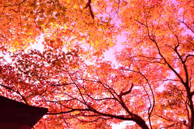 見浜園の紅葉_4の画像