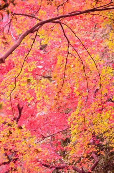 六義園の紅葉_1の画像