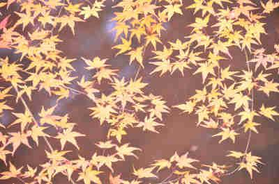 六義園の紅葉_3の画像