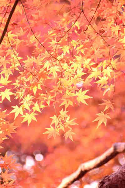 六義園の紅葉_4の画像
