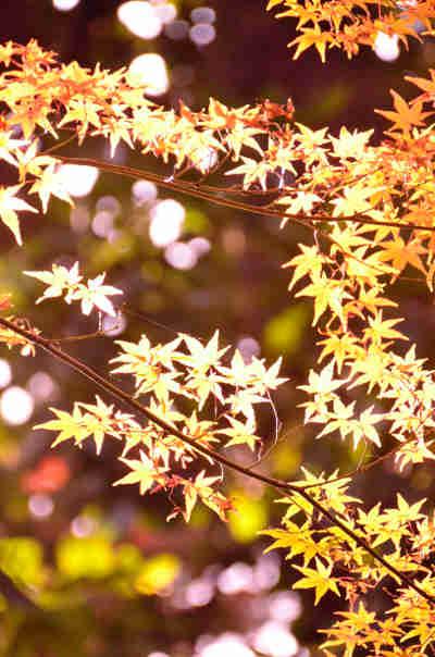 六義園の紅葉_5の画像