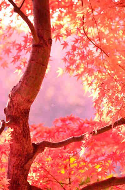 六義園の紅葉_6の画像