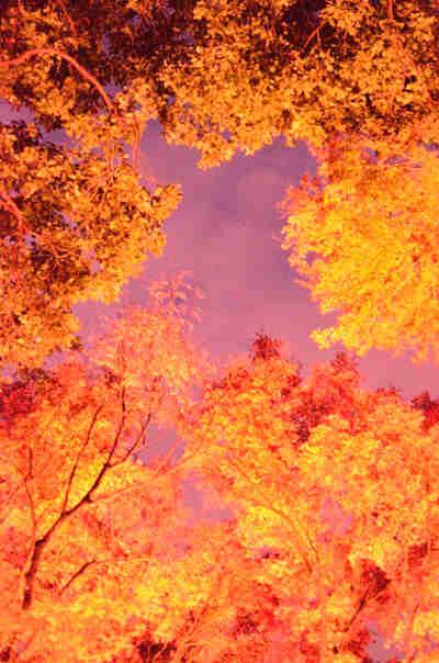 六義園の紅葉_ライトアップ_2の画像