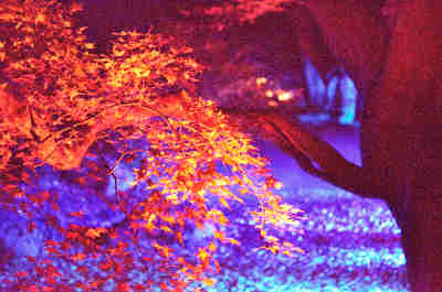 六義園の紅葉_ライトアップ_4の画像