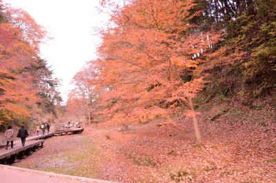 濃溝の滝から、笹川湖畔公園清水渓流広場の駐車場へ戻る途中の遊歩道の紅葉の画像