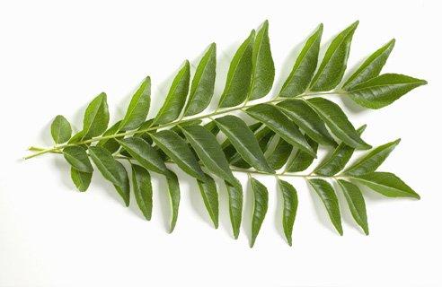 カレーリーフの生葉