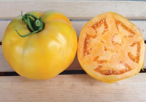 ゴールデントマト