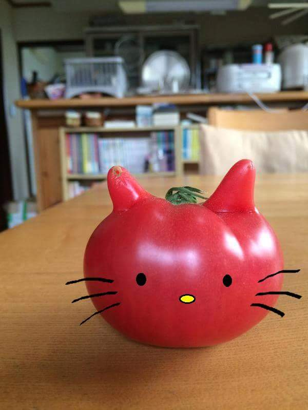 規格内のトマト