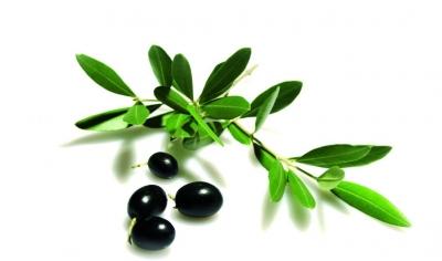オリーブの種
