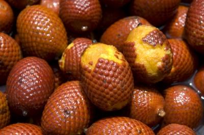 アグアヘ(ミリチーヤシ)の種子
