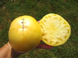 グレートホワイトトマト