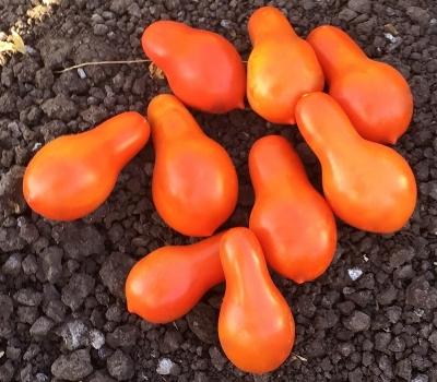 オレンジペアートマト
