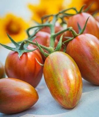 シマーハイブイッドトマト