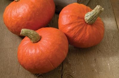 サンシャインかぼちゃ