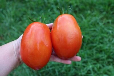 スーパーソースハイブリッドトマト