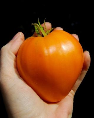 オレンジオックスハートトマト