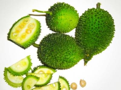 カックロール(スパインゴード、カントラ)の種子