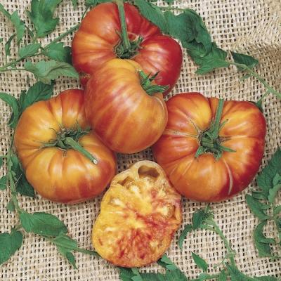 ビッグレインボートマトの種子
