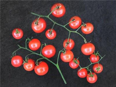 ナパローズトマト