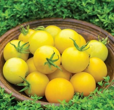 ハニーデライトハイブリッドトマトの種子