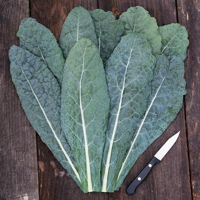 カーボロネロ(ブラックケール)の種子