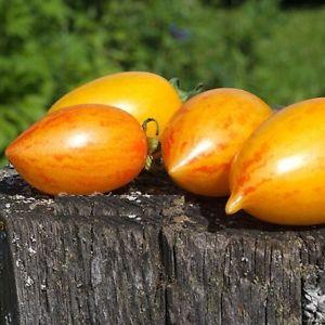 スイートクリームトマトの種子