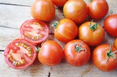 ノーウッドメイナーズトマトの種子