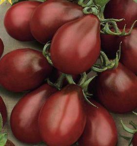 ブラックペアートマトの種子